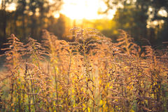 Dry plants Royalty Free Stock Photography