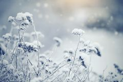 Dry plants in hoarfrost and snow Stock Photos