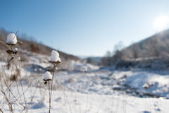 Dry Plants In Snow, View Over Frozen River In Winter Season Stock Photography