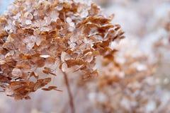 Dry plants , macro. Dry plants plant, macro background creeper plants, desert Stock Photography