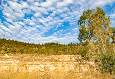 Dry plants in nature. View to dry tree and plants on mount under cloudy blue sky stock images