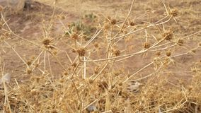 Dry plants outdoors in the mountans Royalty Free Stock Photography