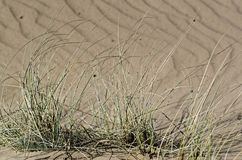 Dry plants in a sandy ground. Nature reserve Boberger Niederung in Hamburg, Germany royalty free stock image