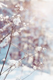 Dry plants in snow Royalty Free Stock Photo