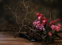 Dry plants 1 Stock Photography