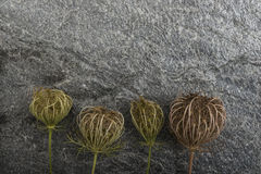 Dry plants on stone background Stock Images