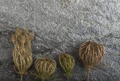 Dry plants on stone background Stock Image