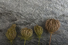 Dry plants on stone background Stock Photos