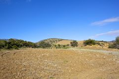 Dry plowed fields of Andalucia Royalty Free Stock Images