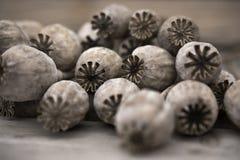Dry poppy heads Royalty Free Stock Photo