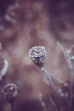 Dry poppy heads. Autumn dark nature Stock Images