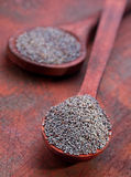 Dry poppy seed Stock Images