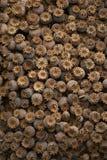 Dry poppyheads Stock Image