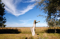 Dry Prairie, Florida royalty free stock photography