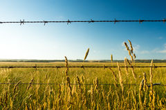 Dry Prairie Grass and Barbed Wire Stock Images