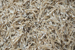 Dry preserved fishes in seafood market. Stock Image
