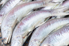 Dry preserved silver fishes in seafood market. Royalty Free Stock Photos