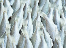 Dry preserved silver fishes in seafood market. Royalty Free Stock Photography