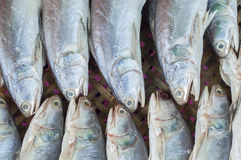 Dry preserved silver fishes in seafood market. Stock Photos