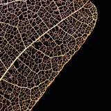 Dry pressed leaf on black background Royalty Free Stock Photography
