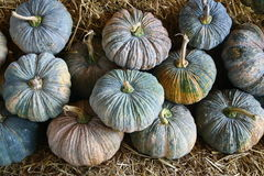 Dry pumpkin Royalty Free Stock Images