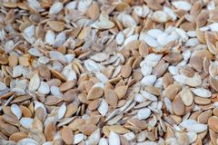 Dry pumpkin seeds background Stock Image
