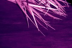 Black dry branch gray background palm tree canvas fabric proton purple pink violet magenta color. Dry purple branch on pink canvas background. Violet palm leaves royalty free stock photo