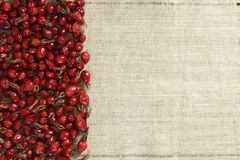 Rosehip on canvas stock image