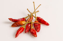 Dry red chili pepper Stock Photography