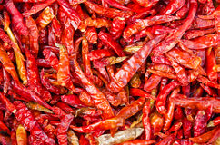 Dry red chili peppers Stock Image