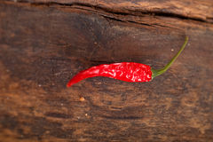 Dry red chili peppers Royalty Free Stock Image