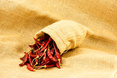 Dry red chili Stock Images