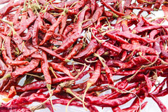 Dry red chili on white background Stock Photos