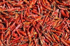 Dry Red Chilies Stock Photos