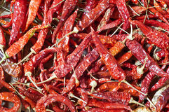 Dry red chilli. Royalty Free Stock Photography