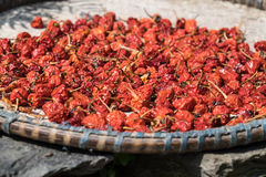Dry Red Chillies. In threshing basket Royalty Free Stock Photo