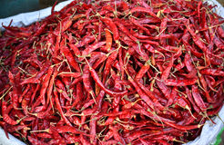 Dry Red Chilly Stock Image