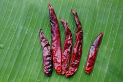 Dry red chilly Royalty Free Stock Images