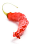 Dry red chilly pepper Royalty Free Stock Image