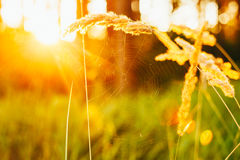Dry Red Grass Field Meadow Stock Photo
