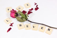 Dry red pink rose with love character text Stock Photo