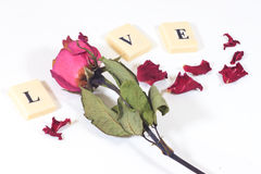 Dry red pink rose with love character text Royalty Free Stock Image