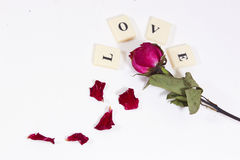 Dry red pink rose with love character text Stock Photography