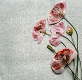 Dry red poppy flowers looks like embroidery on linen background Stock Images