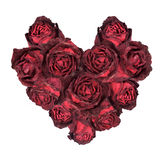 Dry red rose arranged in heart shape isolated Royalty Free Stock Image