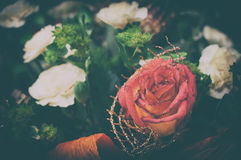 Dry red rose background Stock Photography