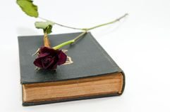 Dry red rose on old Holy Bible stock photos