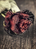 Dry red rose on an old wooden table Stock Photo