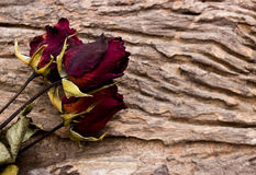 Dry red roses on old wooden Royalty Free Stock Photography