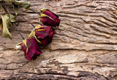 Dry red roses on old wooden Royalty Free Stock Photo